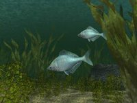 Reel Fishing (1996) screenshot, image №742212 - RAWG