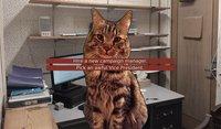 Cкриншот Cat President ~A More Purrfect Union~, изображение № 152357 - RAWG