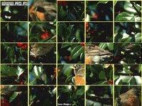 Cкриншот Super VGA Puzzle, изображение № 337104 - RAWG