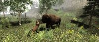 Untamed: Life Of A Cougar screenshot, image №178847 - RAWG