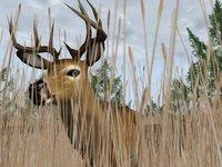 Cкриншот Deer Hunter 2004, изображение № 356751 - RAWG