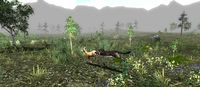 Untamed: Life Of A Cougar screenshot, image №178848 - RAWG