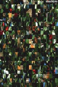 Cкриншот Super VGA Puzzle, изображение № 337106 - RAWG