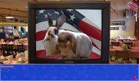 Cкриншот Cat President ~A More Purrfect Union~, изображение № 152363 - RAWG
