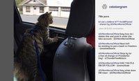 Cкриншот Cat President ~A More Purrfect Union~, изображение № 1673902 - RAWG