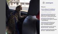Cкриншот Cat President ~A More Purrfect Union~, изображение № 152358 - RAWG