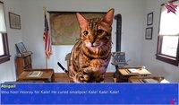 Cкриншот Cat President ~A More Purrfect Union~, изображение № 152361 - RAWG