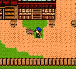 Harvest Moon 3 GBC (2000) screenshot