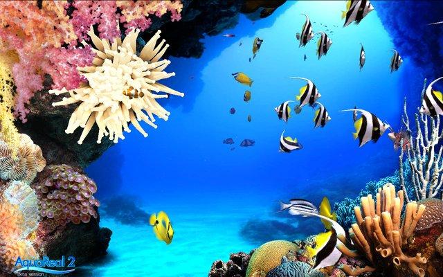 DigiFish Aqua Real 2 screenshot